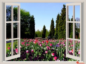 window companies Ottawa